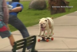 Bulldog skateboards into the record books