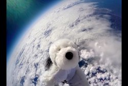 Watch Sam the Dog's journey to edge of space