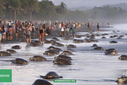 Tourists stop sea turtles from laying eggs