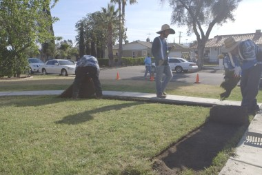 California drought: The turf terminators