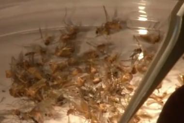 Report: Zika Virus grows in US, territories