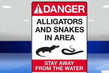 Mother describes near miss alligator attacks