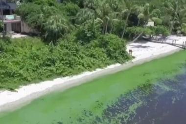 Massive algae bloom reeks Florida coast