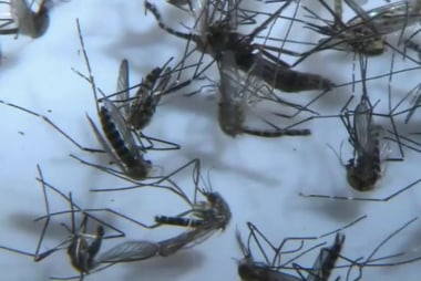 FDA to change blood donation policy over Zika