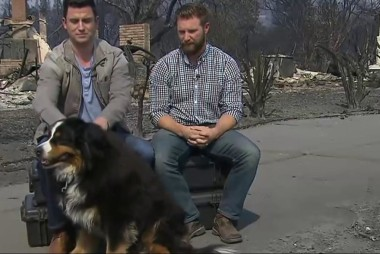 Dog Survives 36 Hours Alone After Wildfire