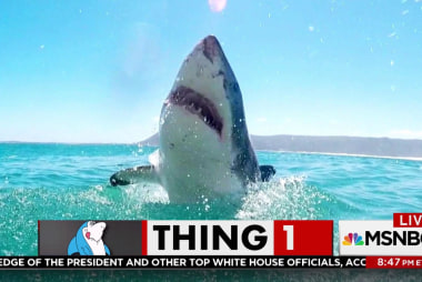 President Donald Trump is afraid of sharks