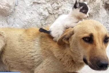 #GoodNewsRUHLES: Street dog adopts orphaned kitten