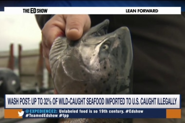 Illegal fishing a $23 billion industry
