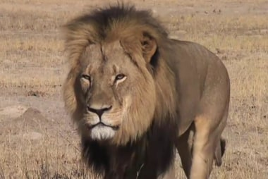 Why are so many upset over Cecil the lion?