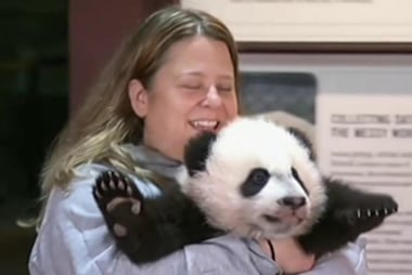 Bei Bei's debut
