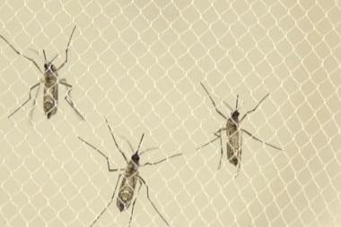 Zika virus 'spreading explosively'
