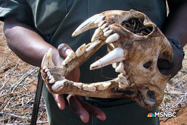Blood Lions Web Extra: Bones
