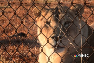 Blood Lions Web Extra: A Lion Sanctuary