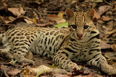 Saving the endangered species of Costa Rica
