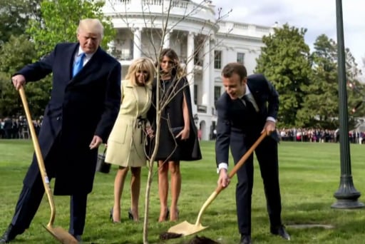 One More Thing: Trump and Macron's friendship tree dies