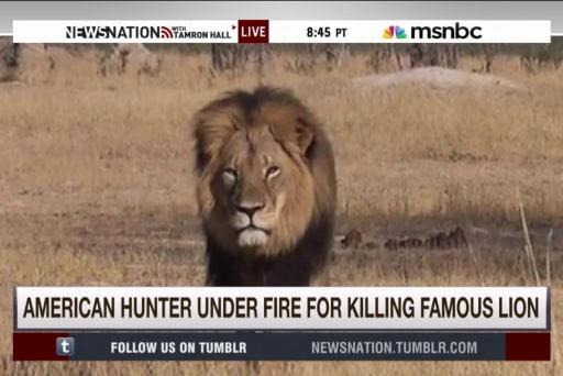 US hunter under fire for killing famous lion