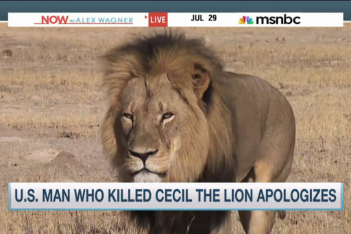 Outrage mounts after 'Cecil the Lion' death