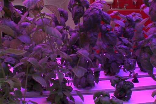 Growing food without sunlight or soil?