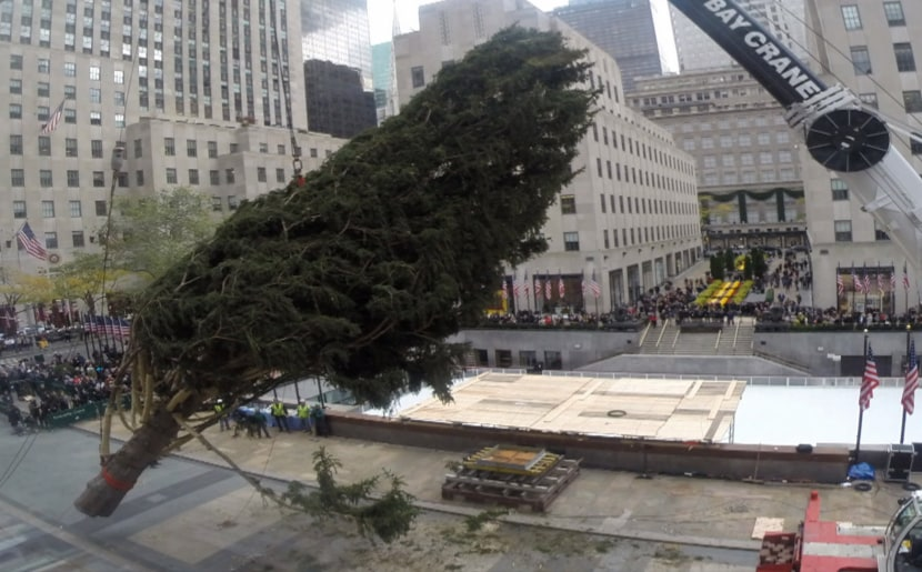 Magical timelapse of 30 Rock tree