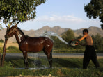 Image: An Afghan man washes his horse in Kabul