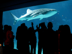 World?s Largest Aquarium Set To Open