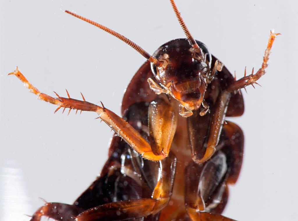 К чему снятся беременные тараканы много живые 321