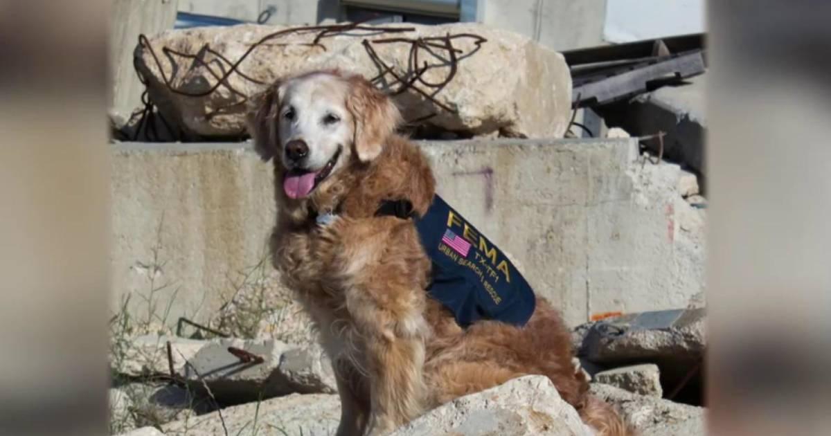 Carson Daly Service Dog
