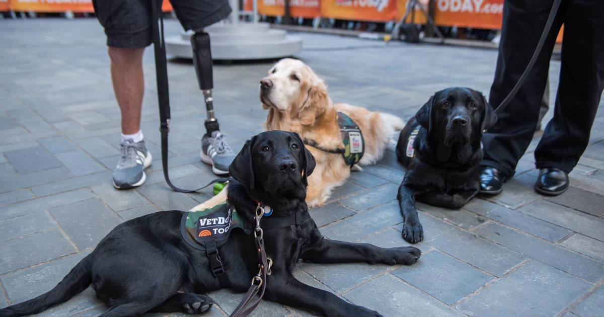 Becoming A Trainer For Service Dogs