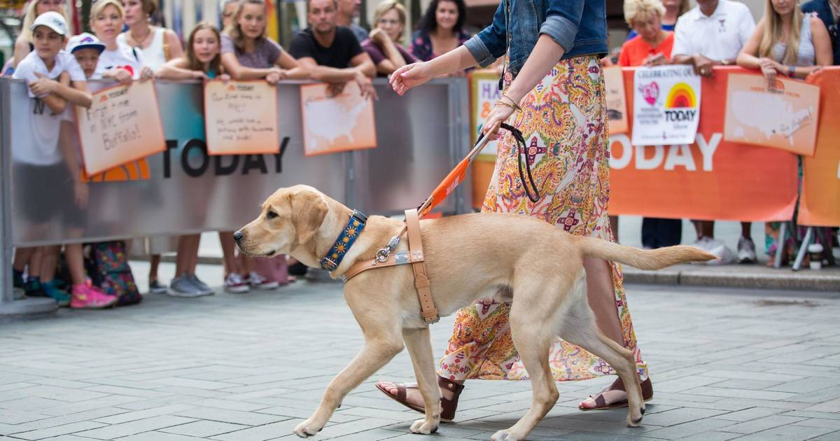 TODAY celebrates 6 months with Sunny as he graduates to next level in guide dog training
