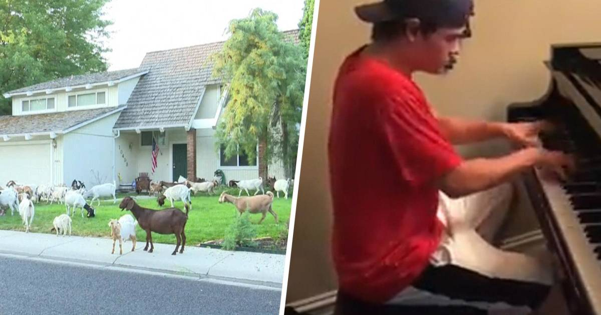 Highs and Lows: Goats loose in a neighborhood, delivery man wows on piano