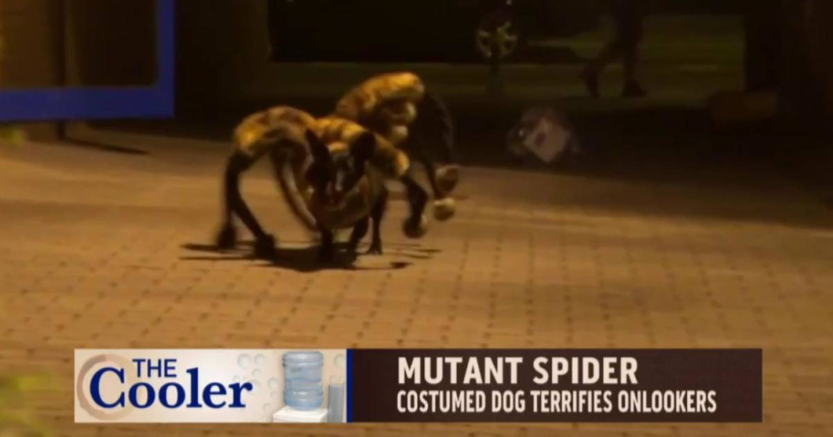 Mutant Spider Dog Scares Pedestrians-8592