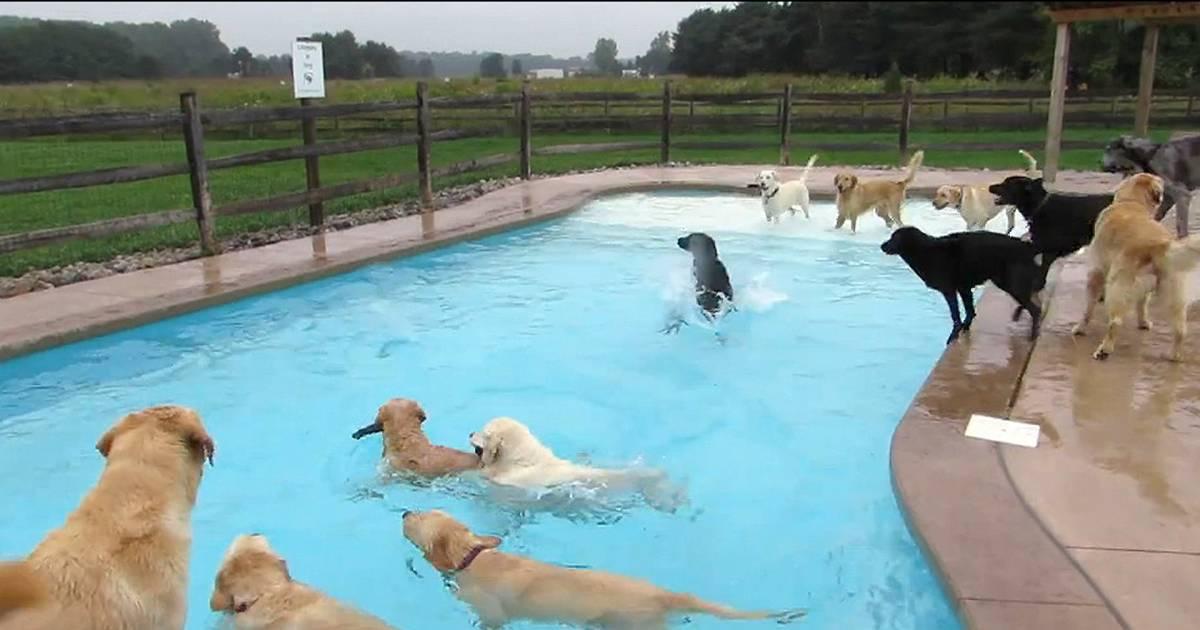 Doggie Day Care In Staten Island