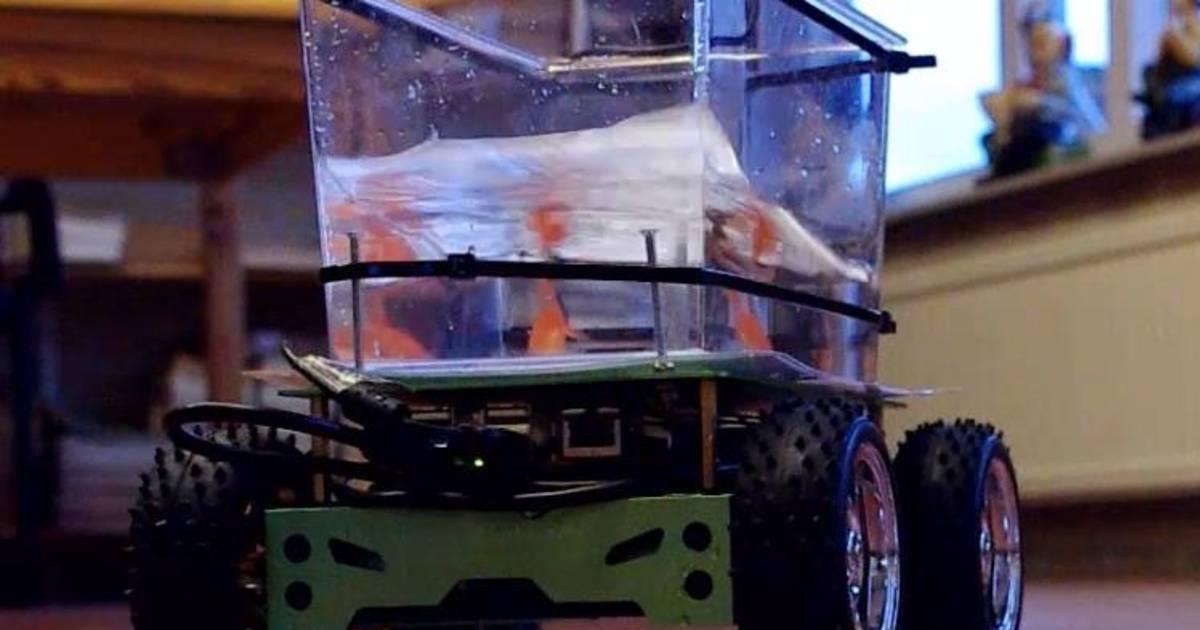 Fish out of water camera setup lets goldfish drive rc tank for Fish tank camera