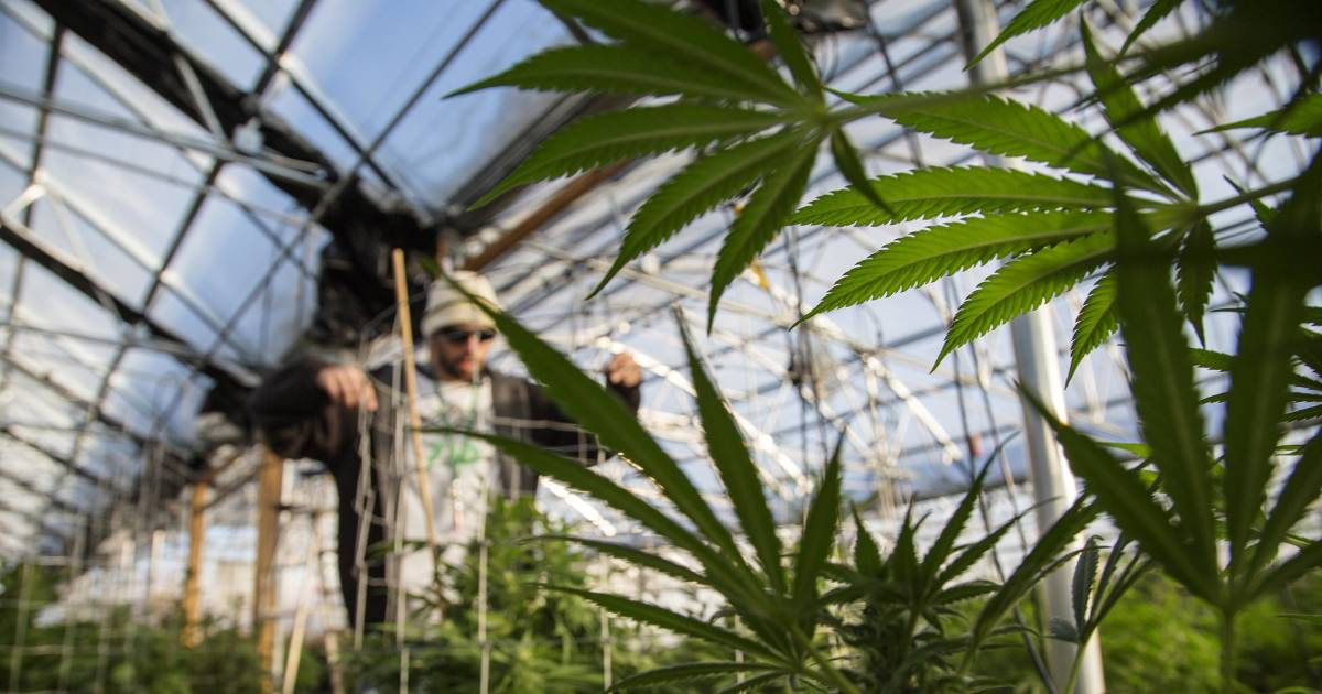 Out of the 'Shadows': Pot Sellers Can Now Do Business With Banks