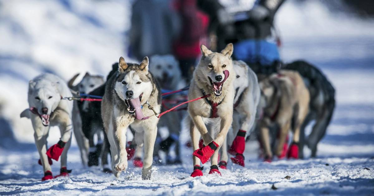 an overview of the iditarod dogsled race of alaska Pair a helicopter flight over the glaciers of juneau icefield with a dogsled ride, and you have the perfect alaska iditarod race from viator uses cookies to.