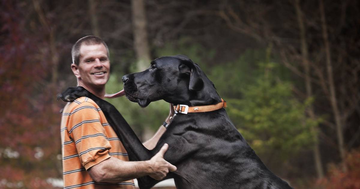Zeus, The World's Tallest Dog Ever, Dies at Age Five