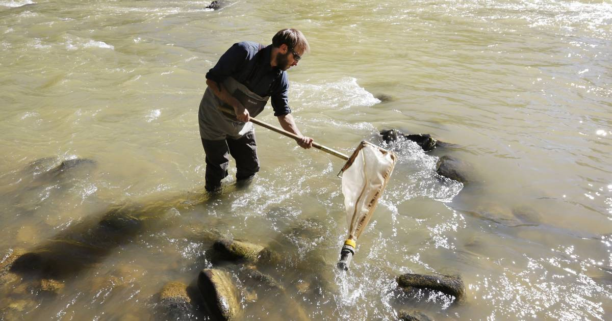 Colorado river spill early tests show little threat to for Colorado fish and wildlife