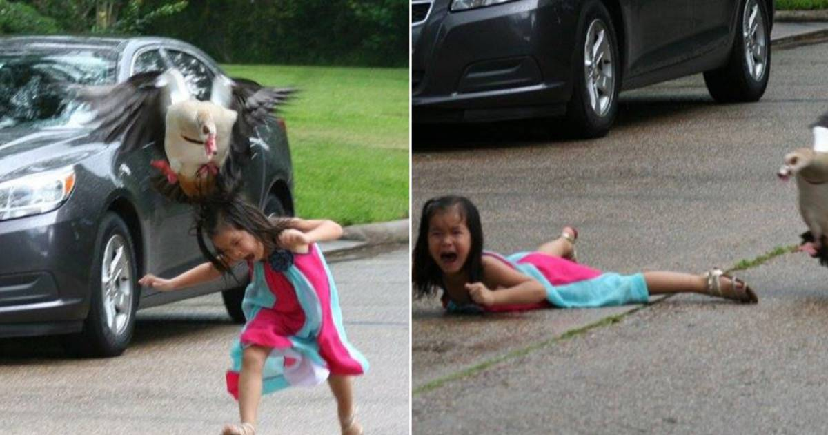 Texas Girl Laughs Off Viral Goose Attack Photo It S So