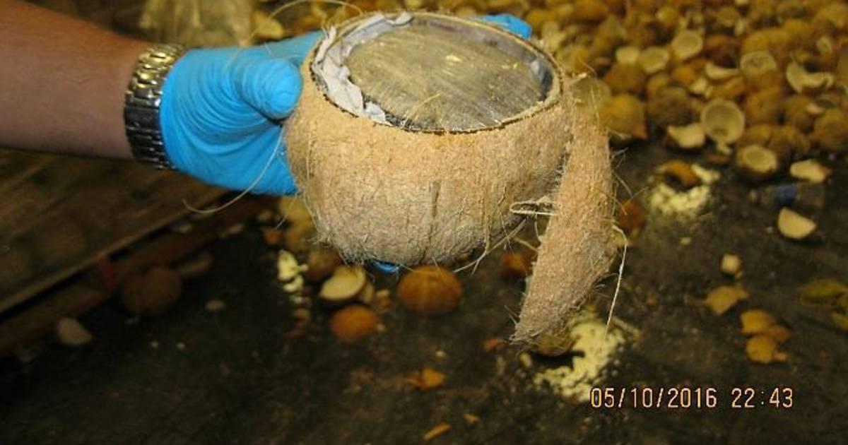 Half a Ton of Marijuana Found in Coconuts at U.S.-Mexico Border