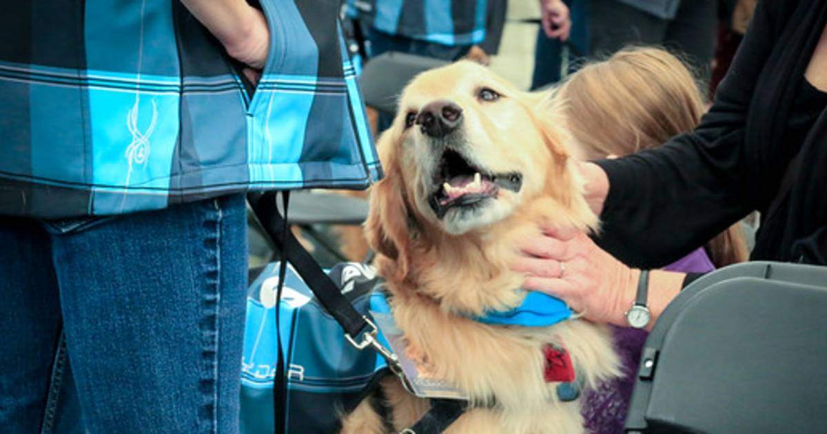 denver_therapy_dogs_d8749fb370066afbd7133eb64827712c.1200;630;7;70;5 pets on the fly? why are there so many animals in the skies and at