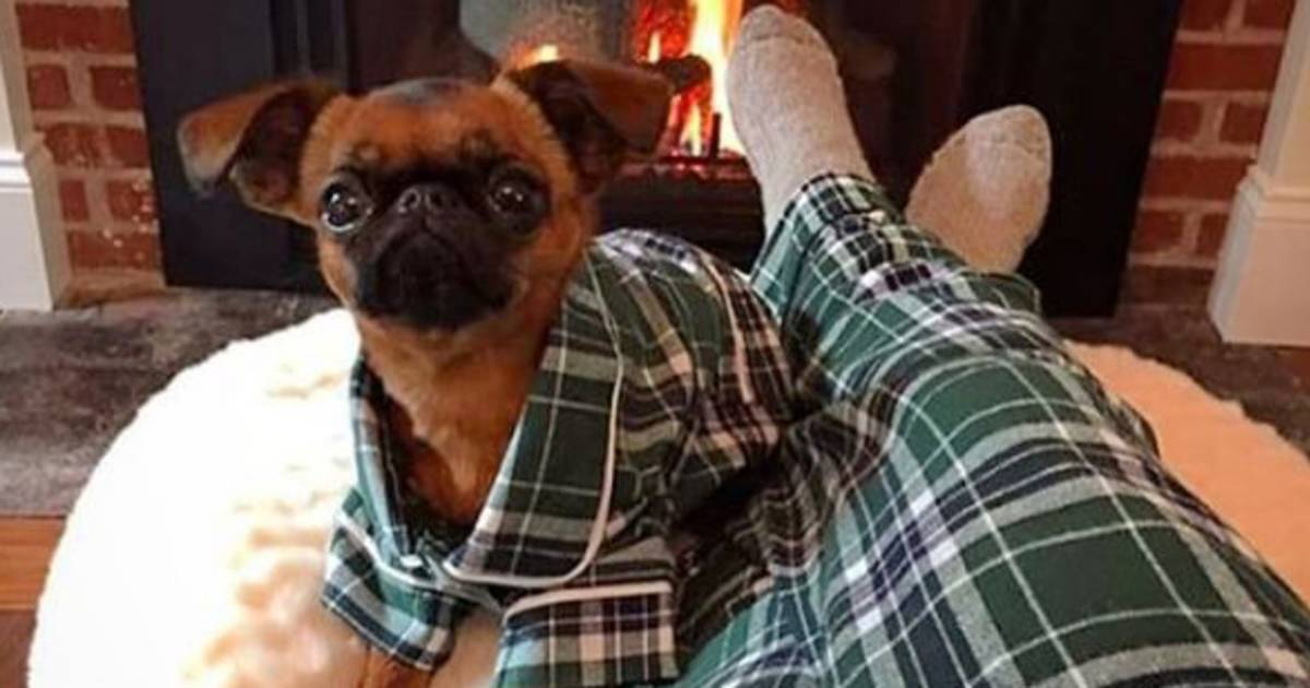 Dog Pajamas Allow Owners To Curl Up With Their Pets In