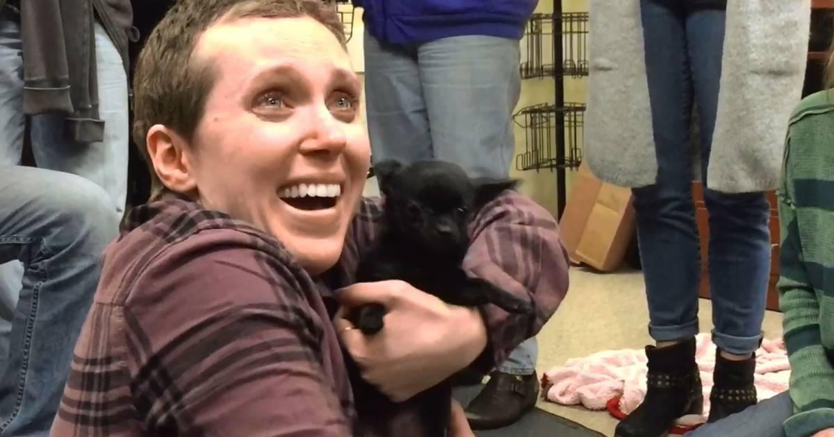Woman battling cancer lives out major fantasy: Being 'showered with puppies'