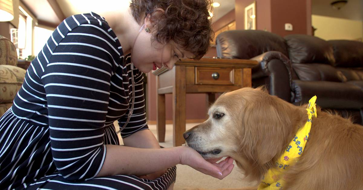 Dogs really are like us: How golden retrievers are helping cancer research