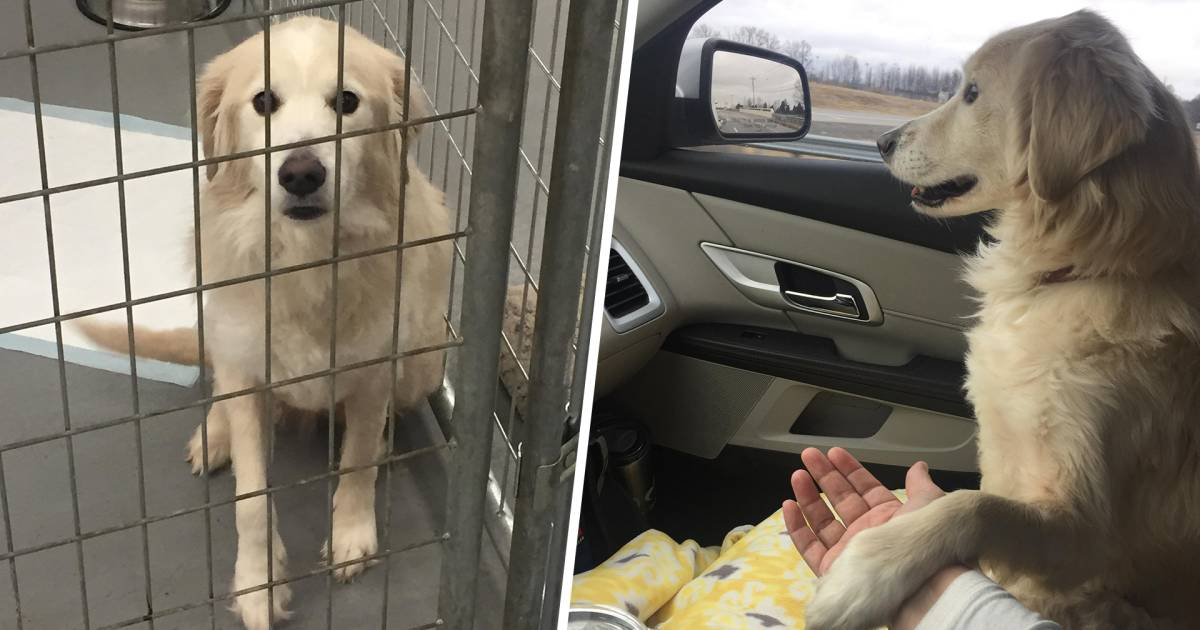 'Grateful' shelter dog holds hands with woman during car ride to foster home