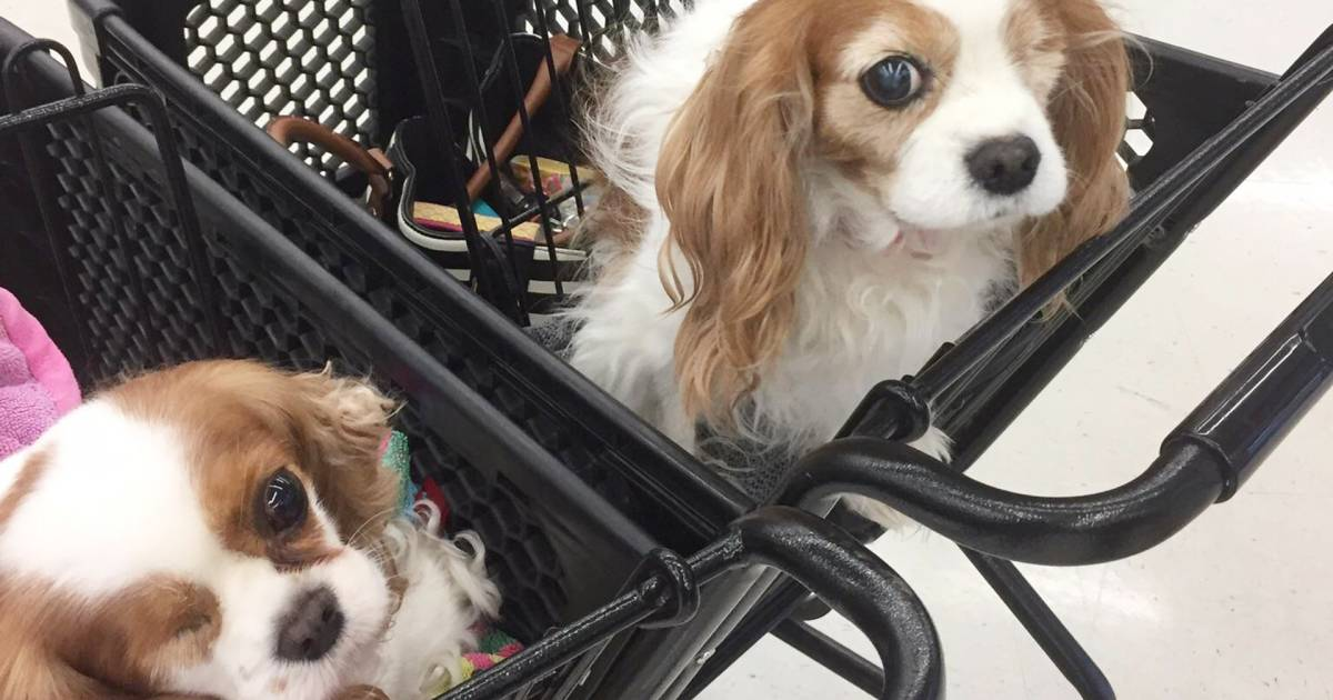 Twinning! The moment these 1-eyed dogs met is magical