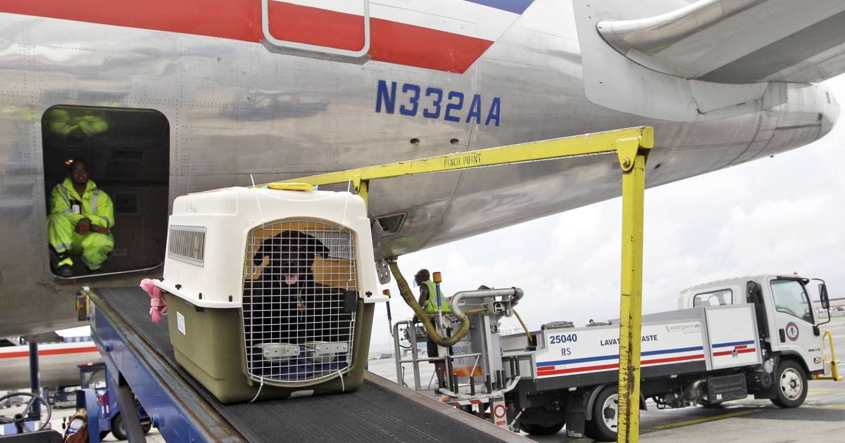United Rolls Out New Pet Transportation Policy Bans