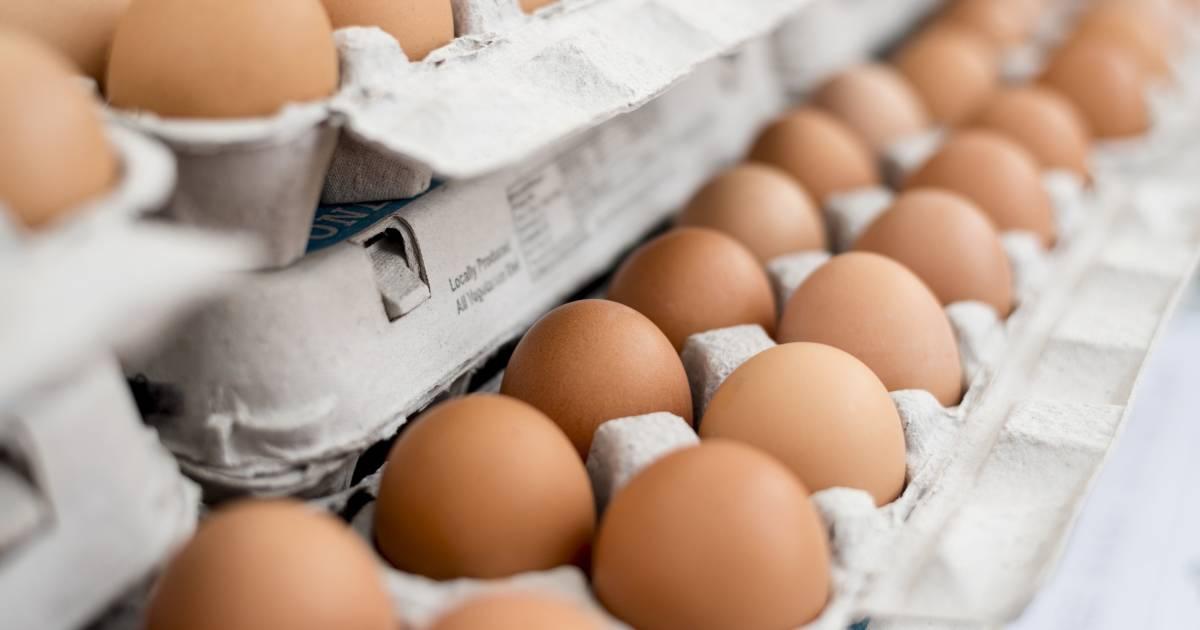 egg recall - photo #30