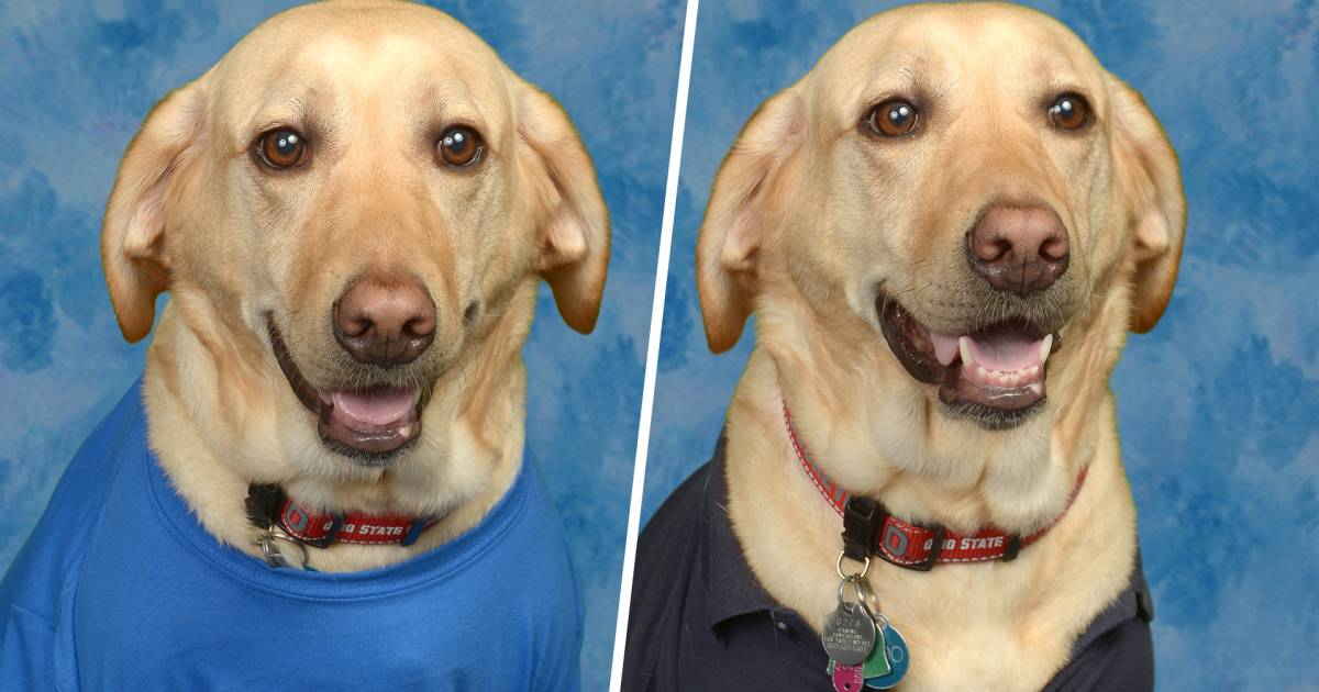 Adorable service dog gets photo in yearbook, graduates from fifth grade