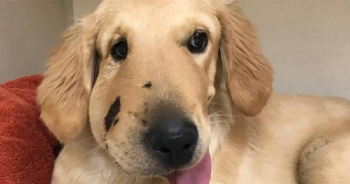 Woman saved from rattlesnake after 'sweet hero' puppy jumps in front of her