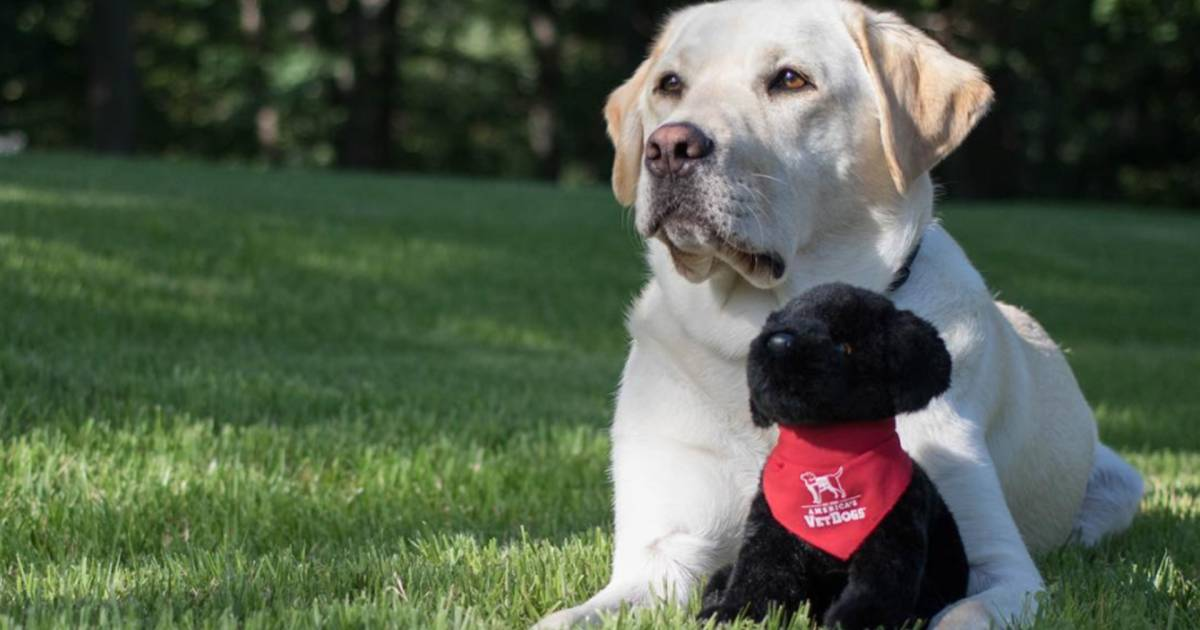 George H.W. Bush's service dog shares his life with the world in Instagram posts